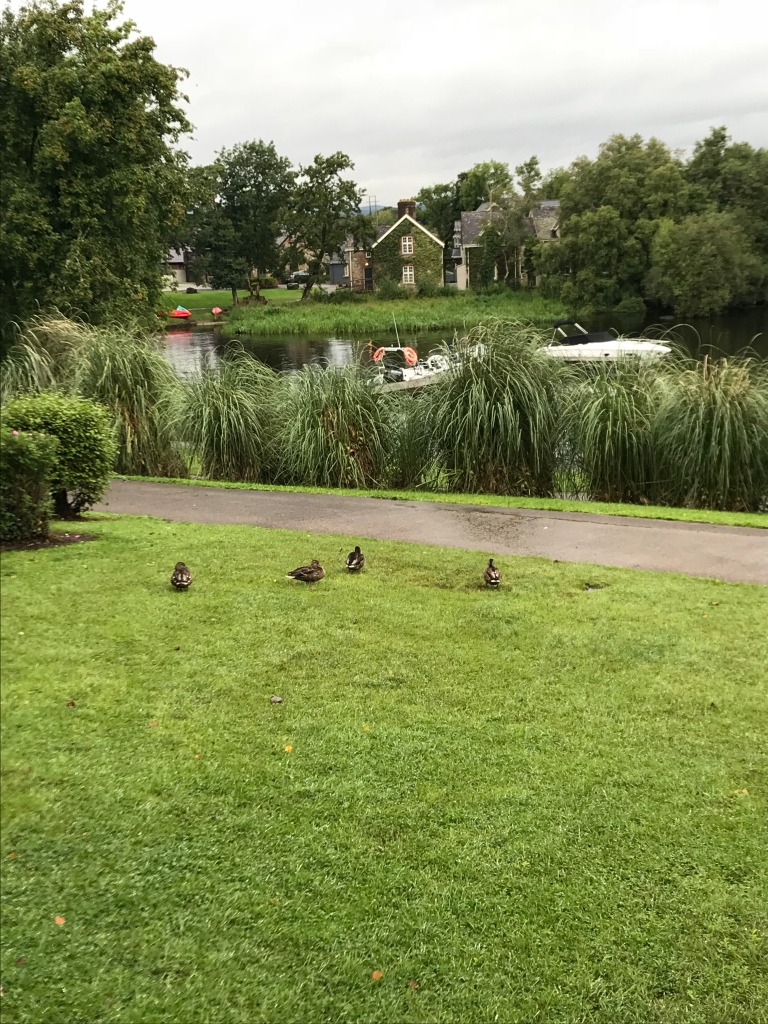 Ducks at Lusty Beg Island